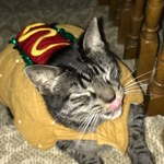 Adorable Hot-Dog Costume for a Small dog or cat (12 pounds and under) is being swapped online for free